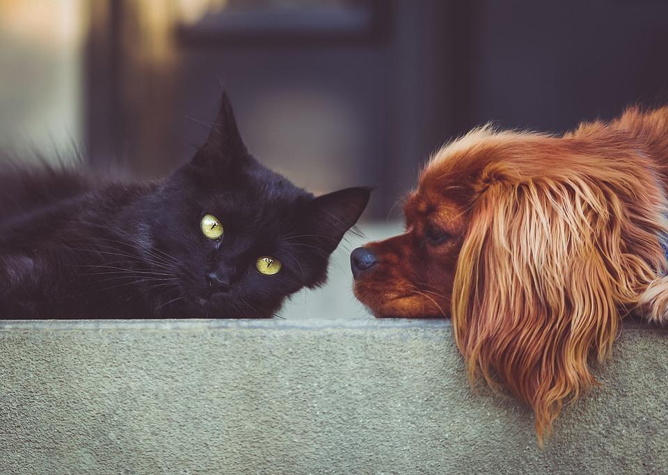 Déménager avec un chat : conseils pour le rendre moins stressant